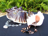 Sea Shells with Jewelry #4